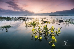 Lake-Blossom