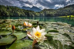 Lake-of-Roses