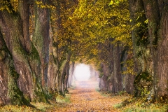 Tunnel-of-Leaves