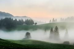 Fog-Dream