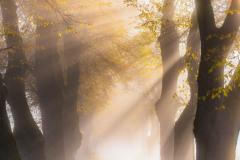Path-of-Light