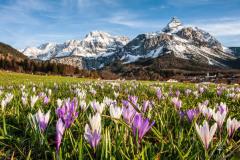 Heralds-of-Spring