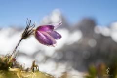 Summit-Blossom