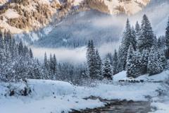 Wild-Winter