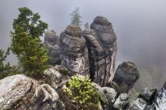 Pine-Rocks