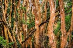 Roter-Wald
