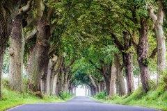 Avenue-of-Oaks