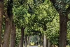 Oak-Avenue