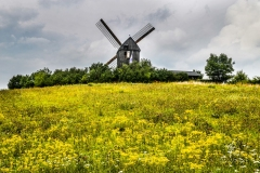 Windmill-of-Flowers